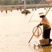 มหาวิทยาลัยขอนแก่นโดยความร่วมมือของคณะเกษตรศาสตร์จัดให้มีการจับปลา ณ บึงสีฐาน มหาวิทยาลัยขอนแก่น